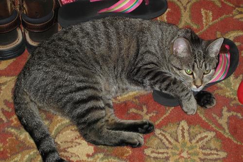 I like flip flops