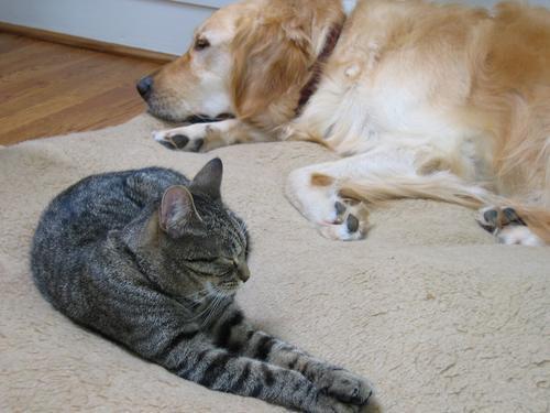 DogCat Bed